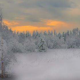 skog med himmel (1 av 1).jpg