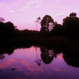 Traralgon Wetlands by Sarah Harding - Novices Only Landscapes ( reflection, sunset, novices only, lake, landscape )