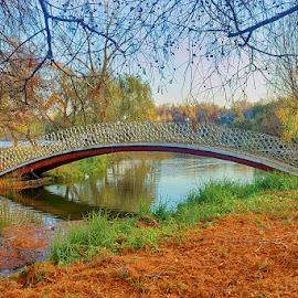 Bucharest - Park of the Youth by Radu Eftimie - City,  Street & Park  City Parks ( bucharest, autumn, lake, romania, bridge, park of the youth )