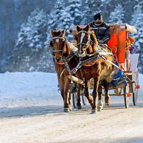 Abant by Veli Toluay - Transportation Other ( bolu, at arabası, kar, kış, abant,  )