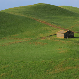 Green grass and small shacks  by Elise Graham - Landscapes Prairies, Meadows & Fields ( field, grass, green, fields, green grass )