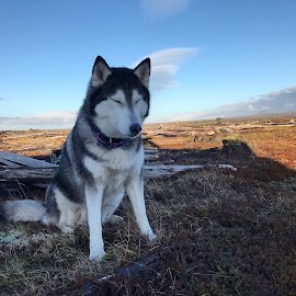 Ronja by Bjarklind Þór - Animals - Dogs Portraits ( meditation )