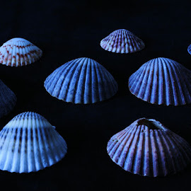 Shells by Dub Scroggin - Nature Up Close Other Natural Objects ( black background, shell, up close, nature, sea )