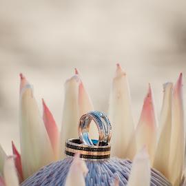 Rings by Jaycee Reynolds - Wedding Bride & Groom ( wedding photography, outdoor photography, wedding, outdoor, summer, jewelry, wedding rings, flower )