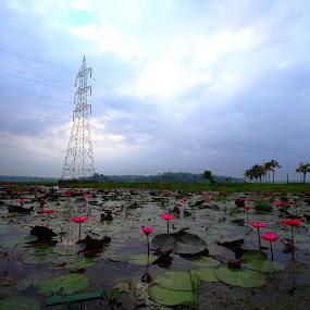 by Syam Alendu Nair - Landscapes Waterscapes
