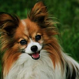 Amigo by Bernarda Bizjak - Animals - Dogs Portraits