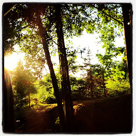 Light in the park by Grace Grantham - Nature Up Close Trees & Bushes ( trees, sun,  )