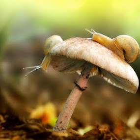 by Alit  Apriyana - Nature Up Close Mushrooms & Fungi