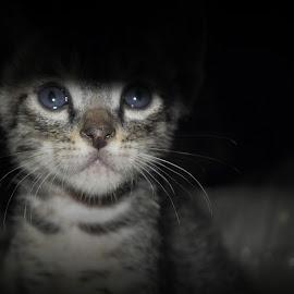 by Nagu Rana - Animals - Cats Kittens