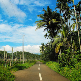 CountrySide by Aparajita Paul - Landscapes Travel ( countryside, kerals, wayanad, nature, palm trees, india, travel, greeneries, mornings )