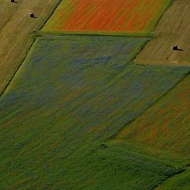 Castelluccio 16 by Bruno Brunetti - Landscapes Prairies, Meadows & Fields ( nature, flowers, italy, castelluccio, fields,  )