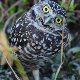 Whoooo are you looking at? by Ruth Overmyer - Animals Birds