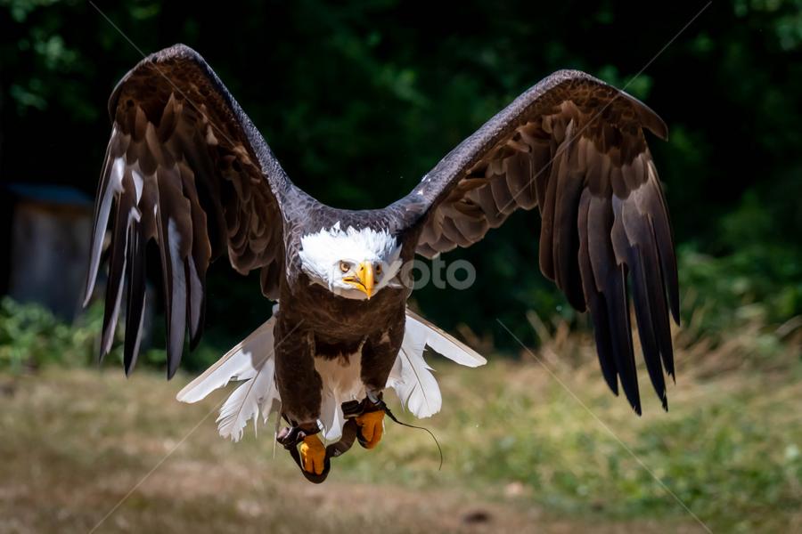 by Darren Sutherland - Animals Birds