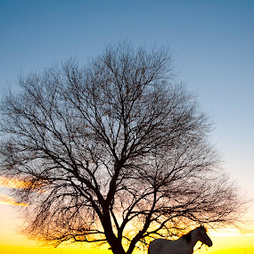 Peace by Onur Köksal - Animals Horses ( #peace hourse )