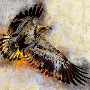 EagleFlight2_DA.jpg