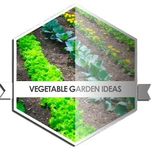 Vegetable garden ideas android apps on google play for Vegetable garden layout app