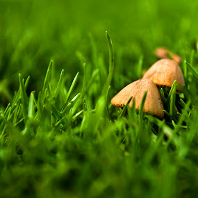 The Mushroom by Chirag Mer - Nature Up Close Mushrooms & Fungi