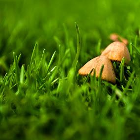 The Mushroom by Chirag Mer - Nature Up Close Mushrooms & Fungi