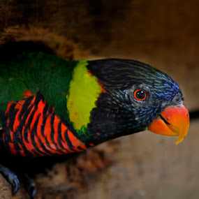 by Sharulfizam Adam - Animals Birds
