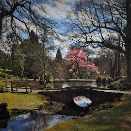 gardens at Wakehurst by Ian Harvey-Brown - City,  Street & Park  City Parks ( relax, tranquil, relaxing, tranquility )