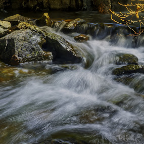 Spring in Stag Creek by Danny Bruza - Nature Up Close Water ( alpine, spring time, water )
