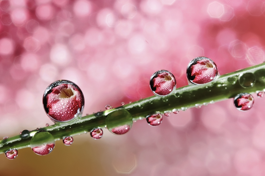Heavenly Ecstasies by Ahmad Soedarmawan - Abstract Water Drops & Splashes
