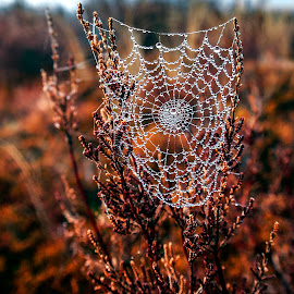 Spider Web by Stanley P. - Nature Up Close Natural Waterdrops ( nature, waterdrops, close up )