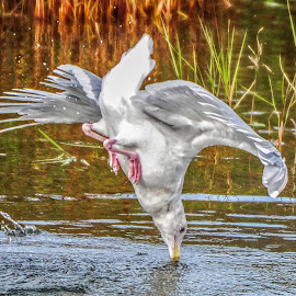 by Terry DeMay - Animals Birds