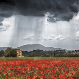Poppies under the rain by Elena Salvai - Landscapes Prairies, Meadows & Fields ( clouds, field, red, nature, field flower, summer, poppies, flowers, landscapes, landscape, rain, flower )