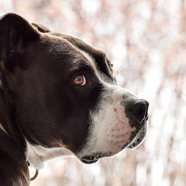 by Jodi Iverson - Animals - Dogs Portraits
