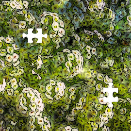 Patterns in Puzzle by Dave Walters - Abstract Patterns ( flowers, nature, puzzle, colors, digital art )