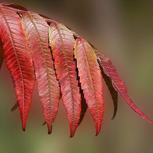 PV-Leaf-0194-2.jpg