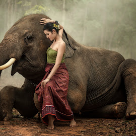 Woman with elephant. by Visoot Uthairam - Animals Other Mammals ( person, monk, seasonal, elephant, thailand, thai, round, security, people, asian, religion, area, nature, asia, ivory, indigenous, gold, men, positive, tall, saffron, orange, animals, novice, symbol, grass, national, male, forest, adult, robe, mammal, resting, sitting, season, strong, pet, outdoors, mahout, praying, scene, ears, sunrise, large, culture )