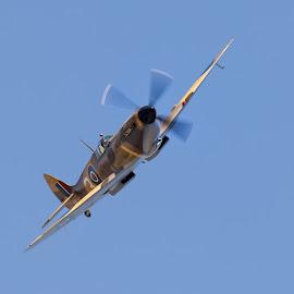 Spitfire by Sam Gosnay - Transportation Airplanes ( ww1, army, airshow, ww2, navy, raf, spitfire )