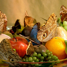 Moth Butterflies and Fruit  by Judy Laliberte - Novices Only Objects & Still Life ( bowl, fruit, butterflies, still life, muticolored )