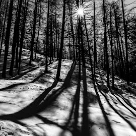 Shadows... by Katherine Rynor - Black & White Landscapes ( snow, trees, shadows, sun )