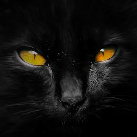 mystic eyes by Hendrata Yoga Surya - Instagram & Mobile Android ( anak kucing, kitten, kucing )
