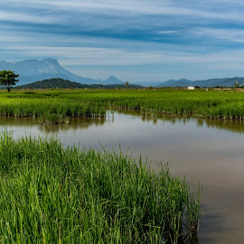 Rice Field in Front of Mt.Kinabalu.Sabah by Ted Khiong Liew - Landscapes Travel ( water, field, mountain, rice, green, trees, travel, morning )