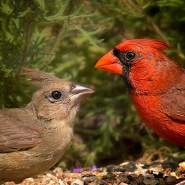 The Happy Couple by Kelley Hurwitz Ahr - Animals Birds ( july 2015, kelley ahr, stock photography, stock images, transition ranch, kelley photology )