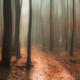 Misty forest by Alex Jitaru - Landscapes Forests