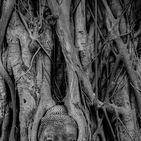 Buddha statue inside tree in Thailand by Vorravut Thanareukchai - Travel Locations Landmarks ( amazing, landmark, statue, thailand, travel, head, buddha )