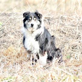 Mr Friendly by Bob Bissonette - Animals - Dogs Portraits ( animals-dogs )