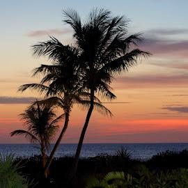 Florida sunset through the Palms by Betty Arnold - Landscapes Sunsets & Sunrises ( sunset, palm trees, seascape, landscape )