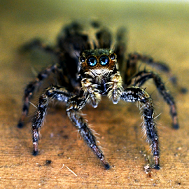 by Aloke Paul - Animals Insects & Spiders