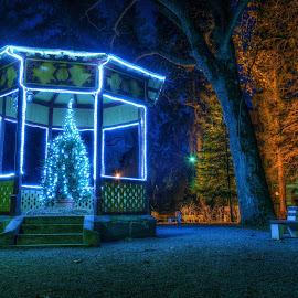 Night in The City Park by Siniša Biljan - City,  Street & Park  City Parks