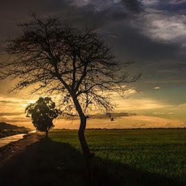 The old tree by Muhammad Sufi - Landscapes Sunsets & Sunrises ( #sunset #paddyfield #tree )