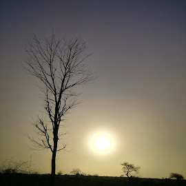 Nature's Strength by Vithoba Mahajan - Nature Up Close Trees & Bushes ( skylines, nature, sunset, trees, photography )