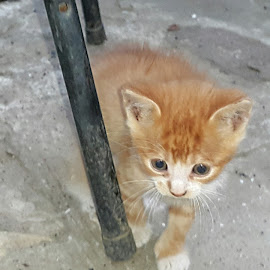 Scared kitten by Vali Tina - Animals - Cats Kittens ( scared kitten cat puss outdoor )