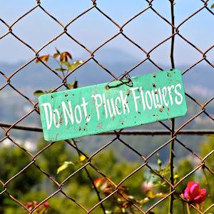pluck flowers.jpg
