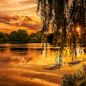 Sunset on the lake. by Gene Brumer - Landscapes Sunsets & Sunrises ( water, sky, tree, sunset, lake, sun )